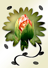 Grafika - Kvety v kvete - 10989708_