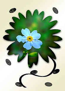 Grafika - Kvety v kvete (zábudlivec) - 10990003_