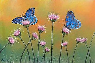 Obrazy - Motýle - 10993891_