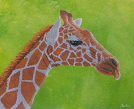 Obrazy - Žirafa - 10993926_