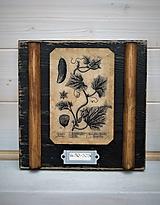Malé botanické obrázky zo starého kabinetu - zelenina (Uhorka)