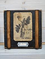 Malé botanické obrázky zo starého kabinetu - zelenina (Mrkva)