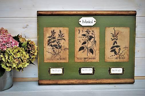 Botanický obrázok zo starého kabinetu v zelenom II.