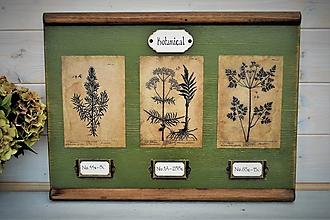 Obrázky - Botanický obrázok zo starého kabinetu v zelenom I. - 10998305_