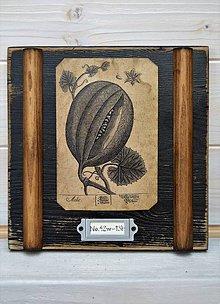 Obrázky - Malé botanické obrázky zo starého kabinetu - zelenina (Dyňa) - 10998361_