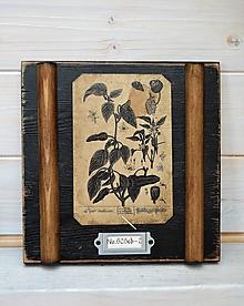 Obrázky - Malé botanické obrázky zo starého kabinetu - zelenina (Paprika) - 10998375_