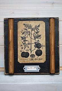 Obrázky - Malé botanické obrázky zo starého kabinetu - zelenina (Rajčina) - 10998380_