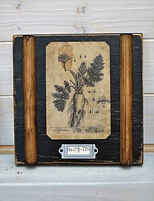 Obrázky - Malé botanické obrázky zo starého kabinetu - zelenina (Mrkva) - 10998398_