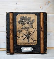 Obrázky - Malé botanické obrázky zo starého kabinetu - zelenina (Petržlen) - 10998410_