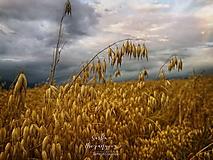 Obrazy - LIPTOV 2019 fotoplátno - 11010876_