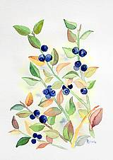 Obrazy - originál akvarel Čučoriedky - 11018101_