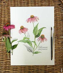Obrazy - Obraz Echinacea purpurea, akvarel, tlač A4 - 11018970_