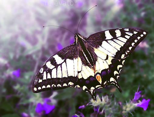 Motýľ užívajúci si oddych
