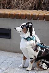 Pre zvieratká - Ocean Breeze Leash - 11023144_