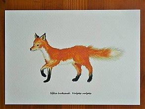 Obrazy - Líška hrdzavá, Vulpes vulpes, akvarel - 11031516_