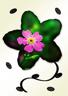 Grafika - Kvety v kvete - 11034961_