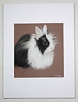 Obrazy - králik Púpava - obraz - 11040417_