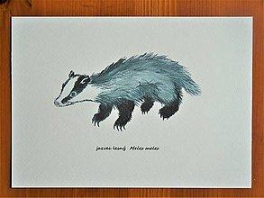 Obrazy - Jazvec lesný, Meles meles, akvarel - 11060833_