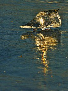 Fotografie - zlatá rybka :) - 11074302_