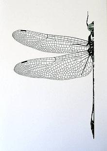Kresby - Vážka zelenošedá - vel. A4 - 11078249_