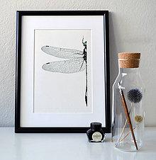 Kresby - Vážka zelenošedá - vel. A3 - 11078255_