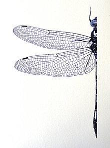 Kresby - Vážka v modrém - vel. A4 - 11078345_