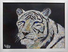 Obrazy - 5. Biely tiger - 11082536_