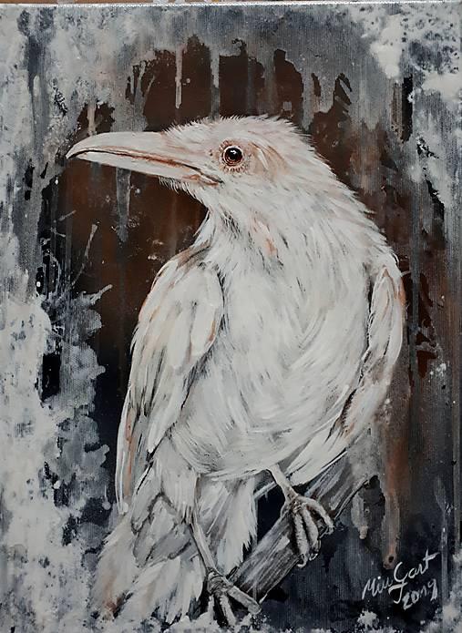 Biely krkavec