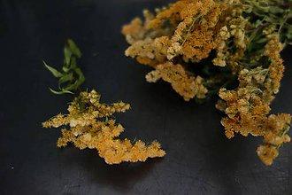 Suroviny - zlatobyľ- kytička pre aranžérov - 11129080_