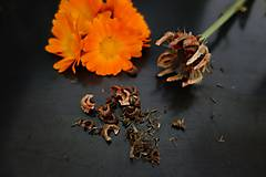 Potraviny - domáce semienka nechtíka lekárskeho 2019 - 11131134_