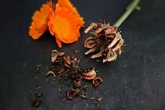 Potraviny - domáce semienka nechtíka lekárskeho 2019 - 11131136_