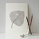 Kresby - List topolu - černobílý, vel. A4 - 11144030_