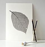 Kresby - List ořechu - černobílý, vel. A4 - 11144046_