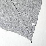 Kresby - List ořechu - černobílý, vel. A3 - 11144057_