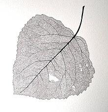 Kresby - List topolu - černobílý, vel. A3 - 11144042_