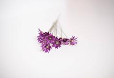 Suroviny - Sušené kvety suchokvetu - 11152650_