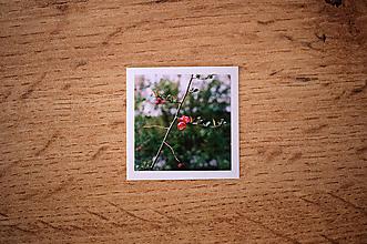 Papiernictvo - Fotonálepka - Šípkový kvet - na zápisník DENNÉ ZÁPISKY - 11151294_