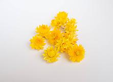 Suroviny - Sušené kvety slamienky - 11152932_