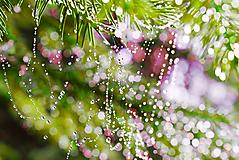 Fotografie - Ráno ukryté v pavučine - 11176351_