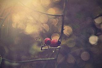 Fotografie - jesenná nálada - 11205833_