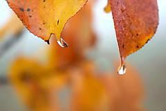 Fotografie - Jesenná - 11209199_
