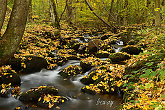 Fotografie - jeseň - 11222081_