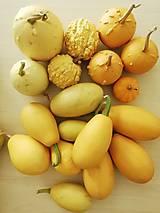 Dekorácie - Tekvičky okrasné - žlté - 11224550_