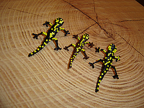 Odznaky/Brošne - Salamandra - 11233621_