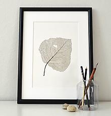 Kresby - List topolu - černobílý, vel. A3 - 11242697_