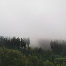 Fotografie - Forest's dreams - 11245711_