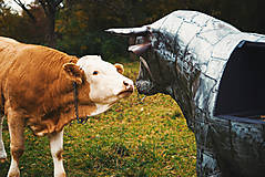 Nezaradené - Stell Bull-Gril - 11243964_