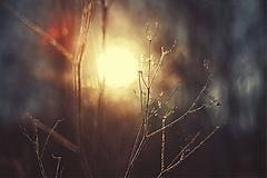 Obrazy - The Farewell Dance XX - 11246392_