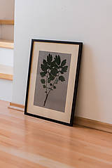Dekorácie - Herbarium - 11249190_