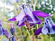 Foto - kvety